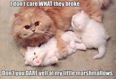 Marshmallows indeed...