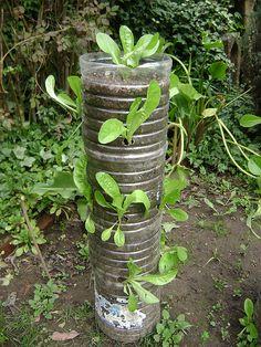 Probando cultivo de lechuga en columna by Earth turns to Gold, via Flickr
