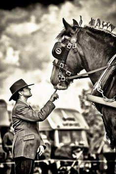 .draft horse