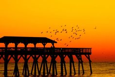 Located in the heart of Myrtle Beach, Myrtle Beach State Park consists of over 300 acres of maritime forest and unspoiled coastline. In addition to the fishing pier, the park also includes campgrounds, hiking trails, and an interactive nature center.