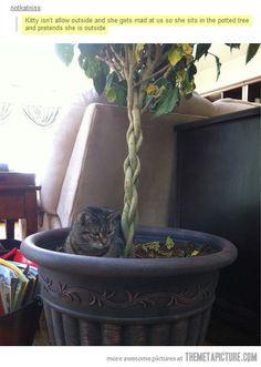 Poor Kitty :(