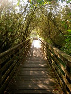 7 Natural Wildlife Spots for Families in Seattle I Seattle Activities for Kids - ParentMap