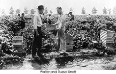 The Knott's of Knott's Berry Farm.