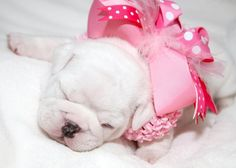 Your Daily Smooshy: Pretty Pink Princess - Canines & Couture