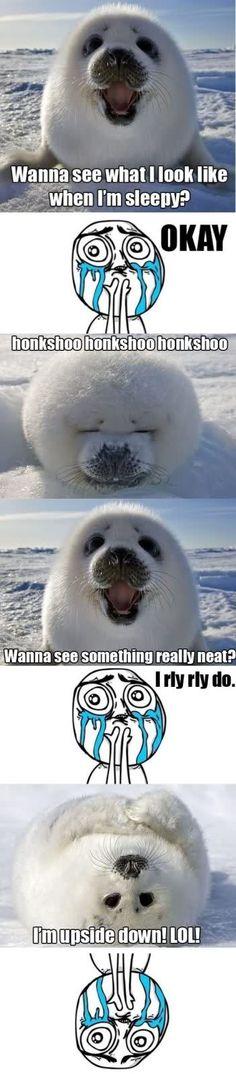 awww, seals, anim, laugh, stuff, funni, babi seal, ador, thing