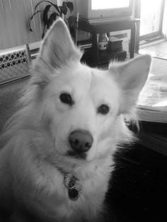 Susan Mitchell's dog, Lily.