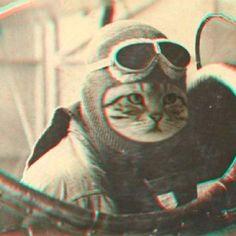 aviator kitty