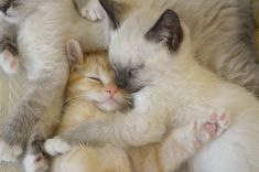 kitten, cutest babies, cuddle buddy, snuggl, baby animals, animal babies, baby cats, sweet dreams, furry friends