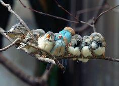 birdy snuggle