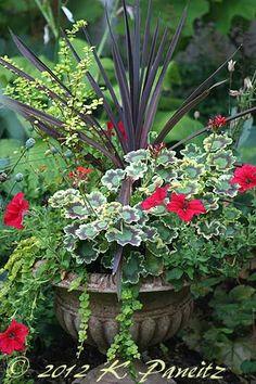 2012 Geranium container red petunia, cottage gardens, red geranium planters, red planters, flower garden geraniums, red flower planter, container plants, sun planter urn, urn planter
