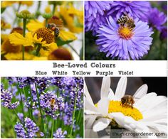 GROW A BEE-FRIENDLY