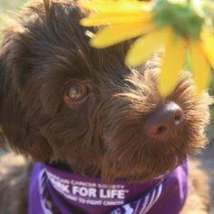 Camo- bark for life
