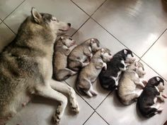 Sleeping in line