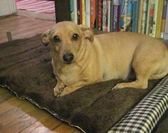 Pictured - my Doxie/JRT mix, Abby.  She is a sweetie!  View from the Birdhouse: eCloth Review and Giveaway: Pet Travel Bed and Wall/Floor Duster