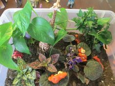 making a rain forest terrarium, great hands on activity for active learners