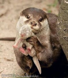 Otter showing us her baby, so sweet!