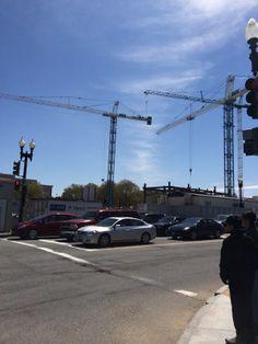 A pair of Washington, D.C. cranes canoodling.