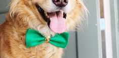 No sew and super simple doggie bowties