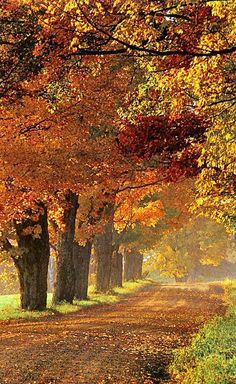 country fall road