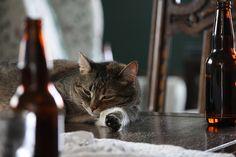 drunk cats, pussycat wine