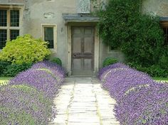 front door entrance, country houses, stone paths, lavender fields, front doors