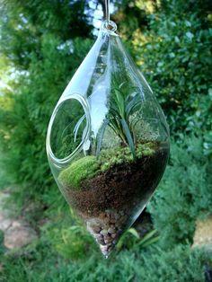 Another amazing terrarium
