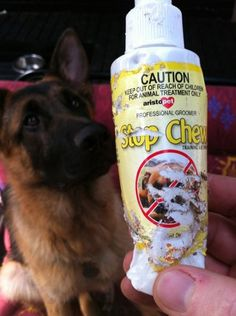 NO WORDS NEEDED! Way too late for refunds… ~ Dog Shaming shame - German Shepherd