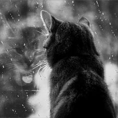 rain and cats. two of my favorite things.