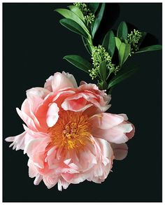 Pink Peony IV by gabyburger on Etsy, $22.00