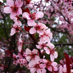 pretti flower