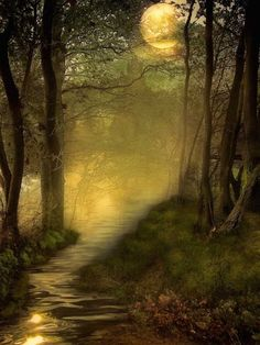 Love this look, re-create something like this with Deco Haven Artistry, Murals & Decorative Painting! Tree, La Luna, Mystical Places, Digital Art, Path, Fairi, Moon River, Forest, Light