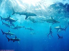 shark infested waters..
