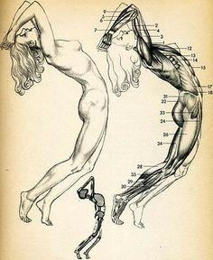 anatomy illustration, body moving