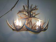 whitetail deer antler chandelier
