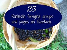 25 Fantastic foraging groups and pages on Facebook
