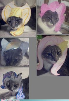 Cat Modeling Various MLP Hair