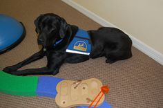Hide my treats, using these tongs!  Fine motor skills! http://www.7sensestherapy.com/animalassistedtherapy.html