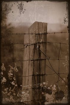 Back in time...I love old fence post & barbed wire...