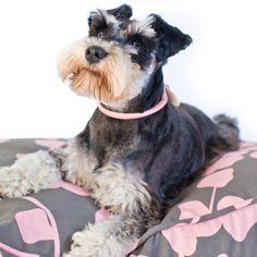 pink and gray dog duvet