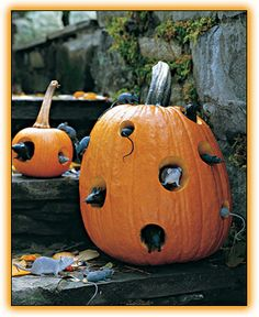 Pumpkins with mice