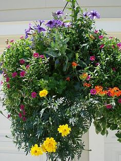 """Shay... think you can make me one of these???  """"Victorian"""" hanging basket suitable for the south that would withstand the harsh summer sun. Staff at Big Bloomers Flower Farm in Sanford, NC helped a customer pick out the plants and this was the result."""