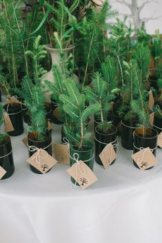 """Favors from a """"tree - inspired"""" wedding"""