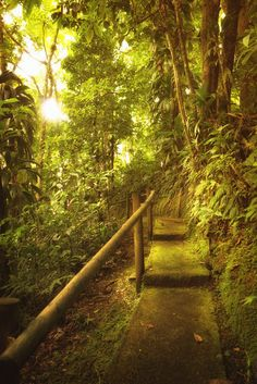Martinique - The French Caribbean - Rainforest