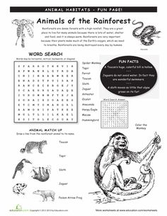 Worksheets: Animal Habitats: Rainforest animals, school, anim habitat, educ, nature worksheets, rainforests, habitat worksheets