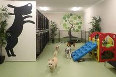 -Repinned- Doggie daycare business inspiration & ideas from around the web.