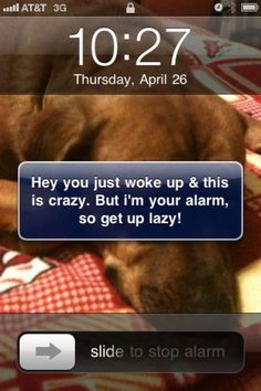 call, song, animals, morning messages, alarm clocks, funni, morning quotes, random, carly rae jepsen