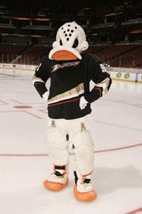 Wild Wing - Anaheim Ducks - Fan Zone