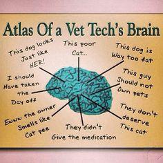 vettech, tech brain, anim, life, stuff