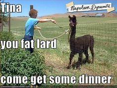 hahahaha :) Napoleon Dynamite <3