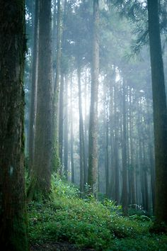 mystical forest